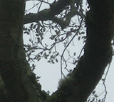 Heart-Shaped Branches